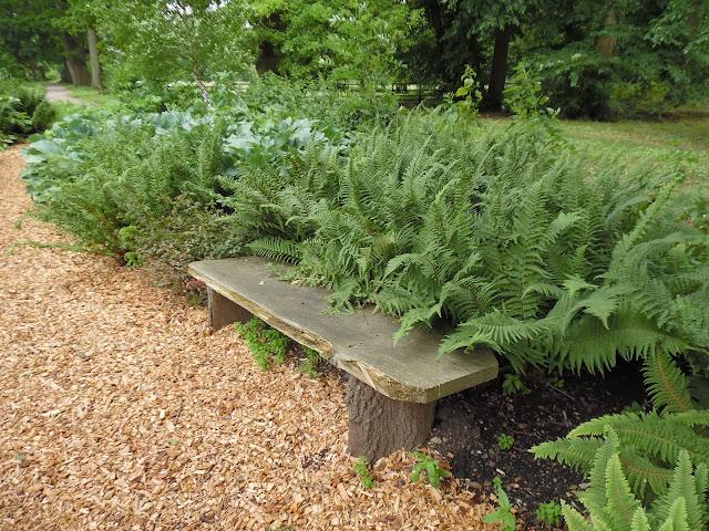 ogród leśny, drewniana ławka
