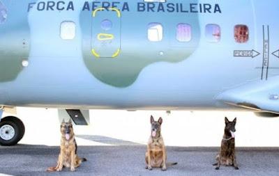 Cães participam de missão em presídio de Rio Branco