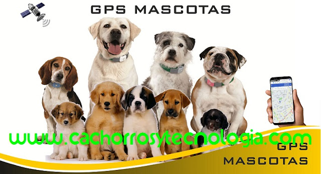 tecnologia cachorros shurkonrad dog can puppy perro GPS