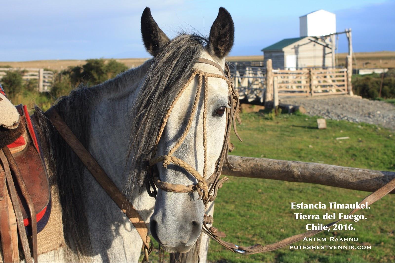 Лошадь на эстанции Тимаукель в Чили