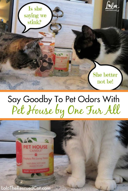 Pet House by One Fur All