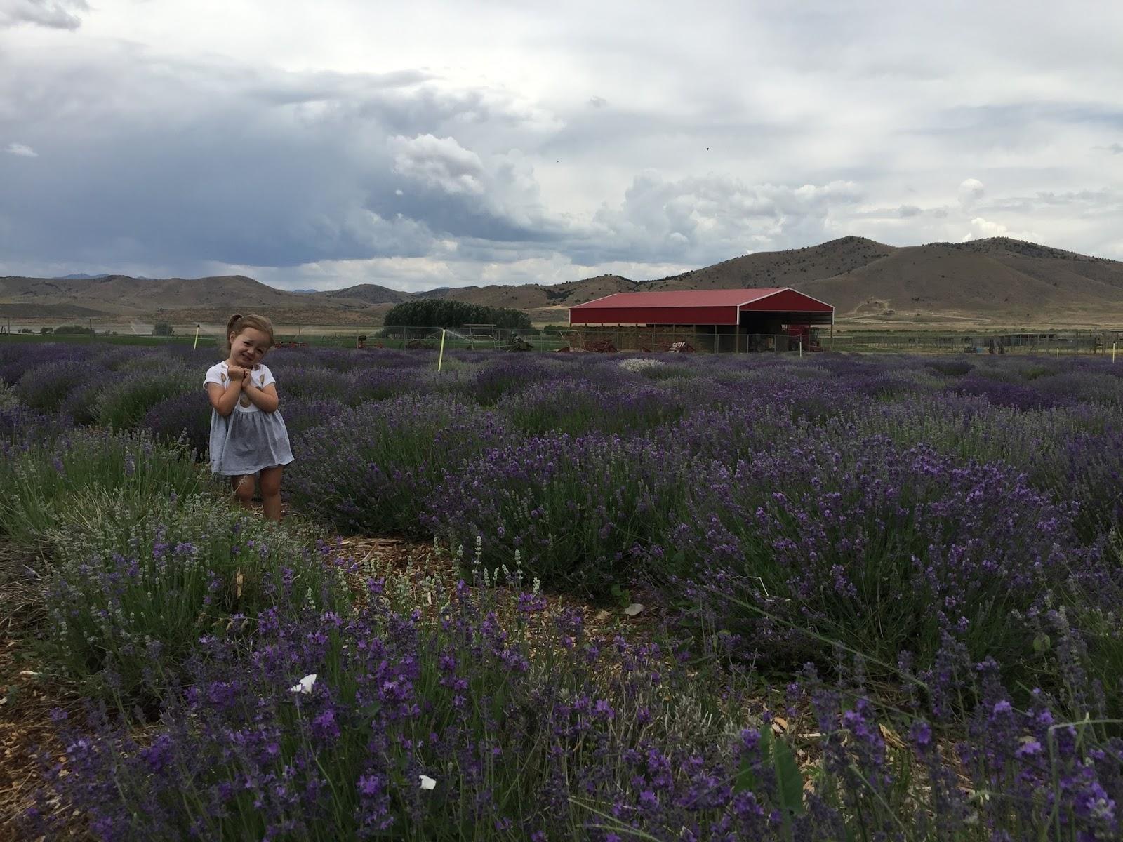 Mommy Vignettes Lavender Farm In Mona Ut