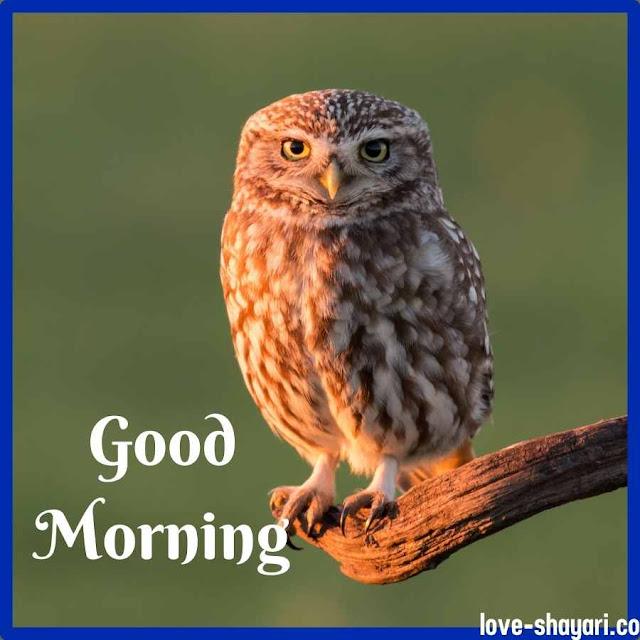 good morning ka photo