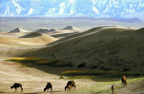 Resultado de imagem para Deserto de Gobi