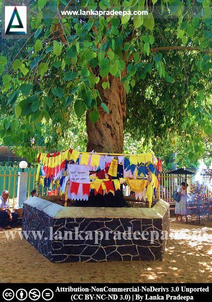 Kotte Raja Maha Viharaya