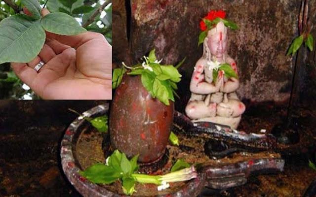 भगवान शिव को क्यों पसंद हैं बेल पत्र?, चढ़ाते वक्त इन बातों का रखें ख़ास ख़्याल