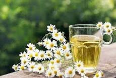 فوائد وأهمية شاى البابونج Chamomile tea  وأهميته للصحه وجمال الشعر