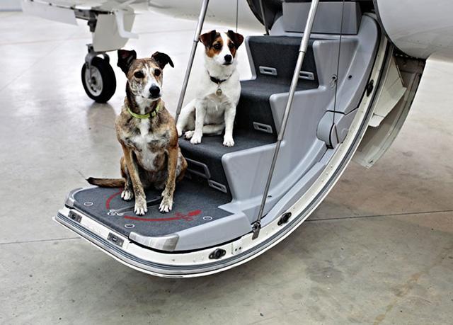 Các bước chuẩn bị để đưa chó đến nhà mới hoặc đi du lịch xa
