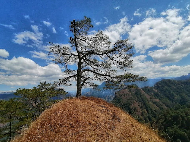 Mount Kabunian Mighty Tree