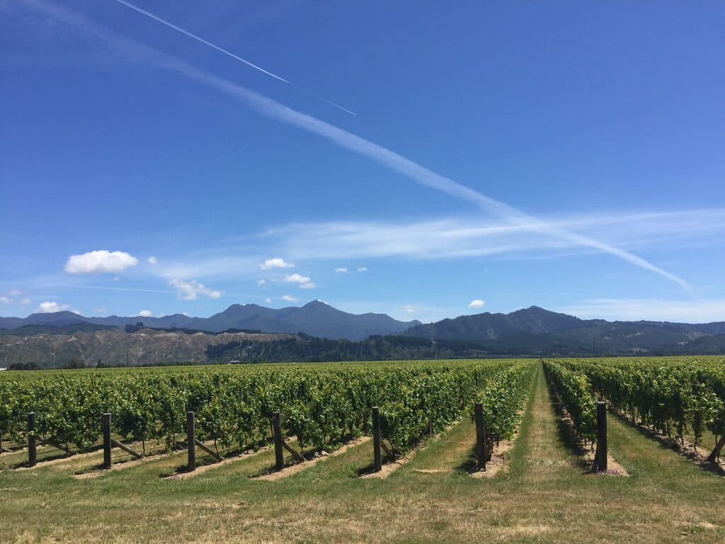 new zealand vineyards, best time to travel to new zealand