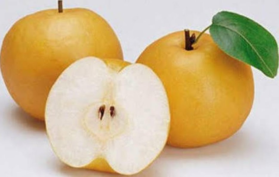 Bibit tanaman buah pear asia Salatiga