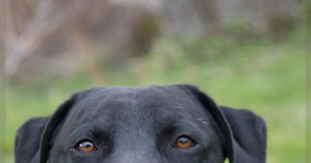 Metro Animal Services Dogs