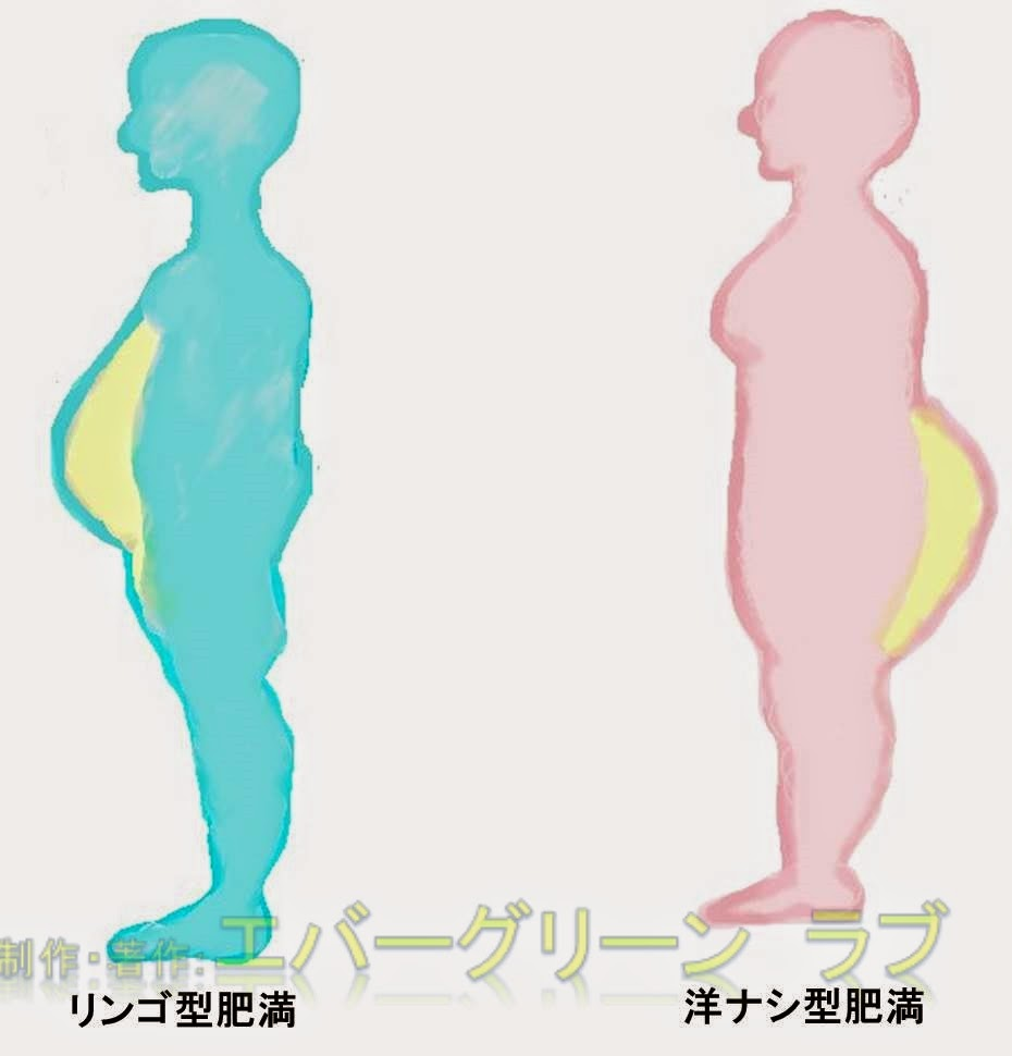 ひまんのたいぷ りんごがた ひまん なしがた ひまん エストロゲン 炎症 運動不足 脂肪細胞 脂肪組織 インスリン 閉経 中年 おなか お腹 おしり テストステロン リポタンパクリパーゼ 脂肪細胞 内臓脂肪 皮下脂肪 閉経前 食事 太もも 男性 女性