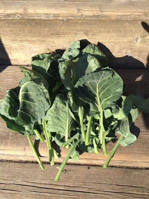 Are-Brussels-Sprout-leaves-edible