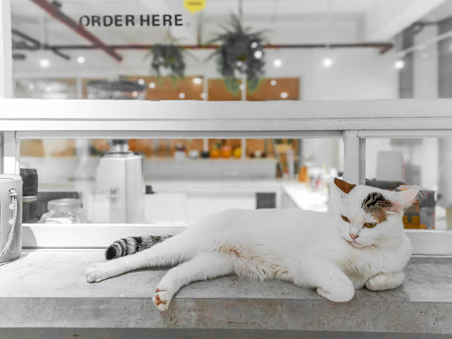 calicoffice cat cafe bsd