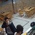 Comerciante campinense morre assassinado após reagir a assalto