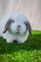 gras voor je huisdier