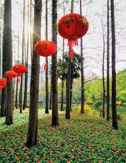 Lanterns In Changfeng Park, Shanghai