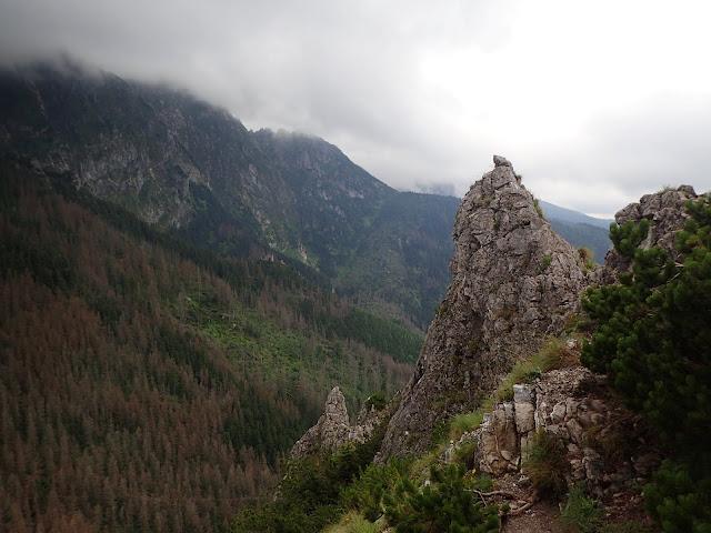 Skały na wierzchołku Sarniej Skały (1377 m n.p.m.)