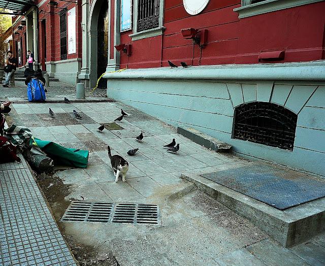 Un gato y palomas a su alrededor en armonía.
