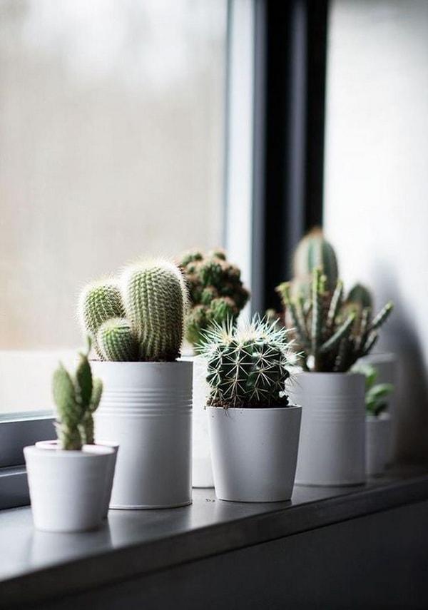 Original Ideas For Decorating Interiors With Cactus 8