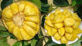 buah nangka, macam macam buah nangka di indonesia