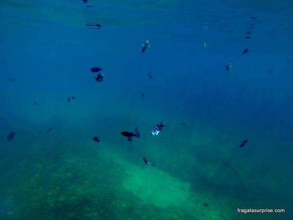 Mergulho na Baía do Sancho, Fernando de Noronha