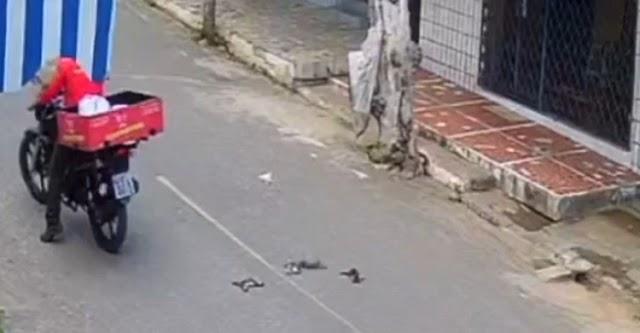 Mulher é flagrada arremessando cinco filhotes de gato na rua, em Canindé; dois morrem