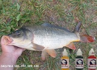 Essen Ikan Mas Subang Harian