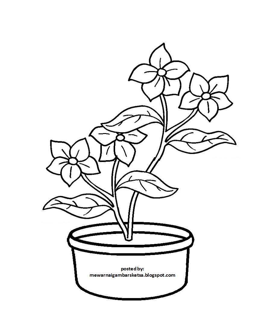 Sketsa Gambar Bunga Dalam Pot