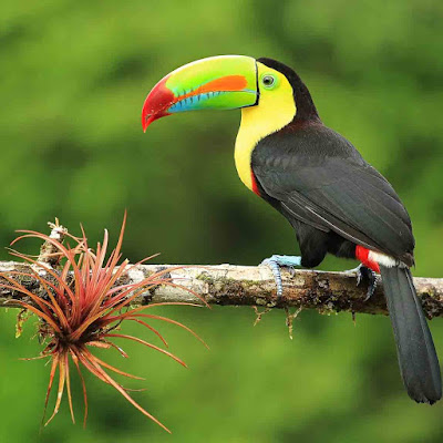 اجمل صور طيور تحفة اوى