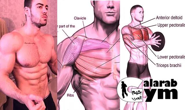 أقوى تمارين الصدر في البيت ( كمال الأجسام ) تضخيم العضلات - home chest