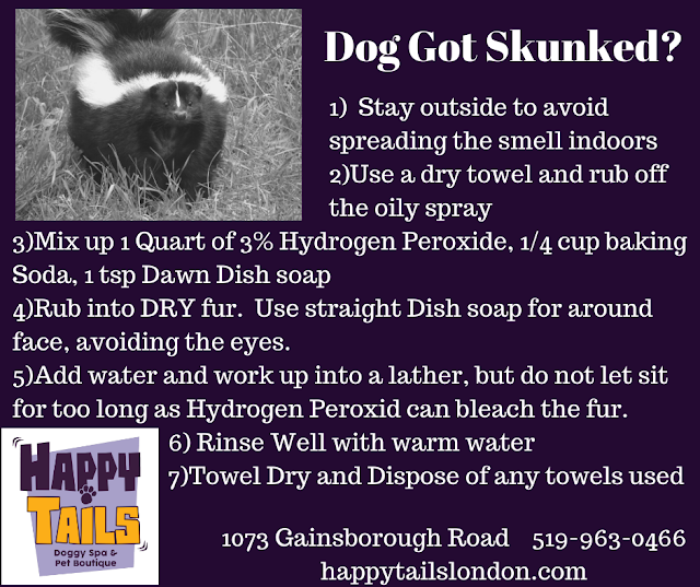 Dog Skunk Shampoo Recipe