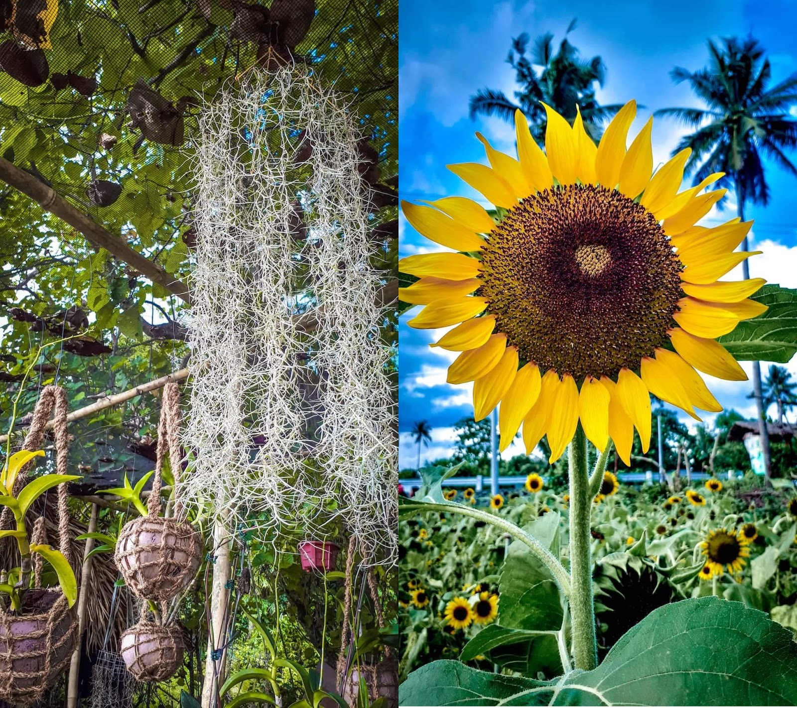 d green thumb garden in irosin sorsogon