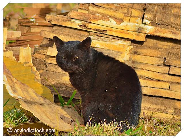 A Black Cat taking Sunbath