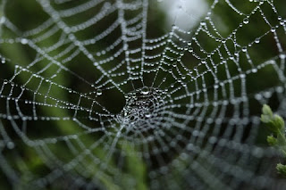 pająk życie przemyślenia zielona małpa