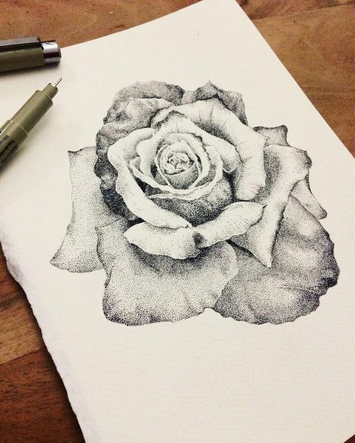 10-Rose-petals-Fred-Ughetto-www-designstack-co