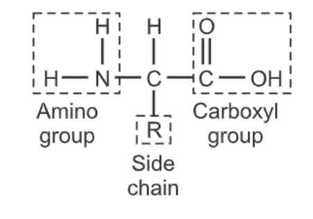 Protein Structure: Primary, Secondary, Tertiary and Quaternary Structures