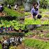 Hortas escolares reforçam desenvolvimento pedagógico na rede estadual