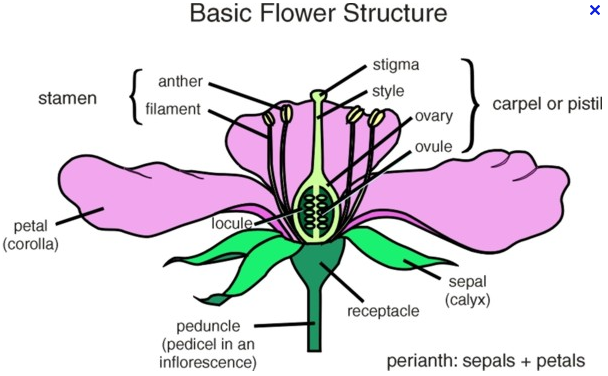 Asexual reproduction in plants quizlet medical terminology
