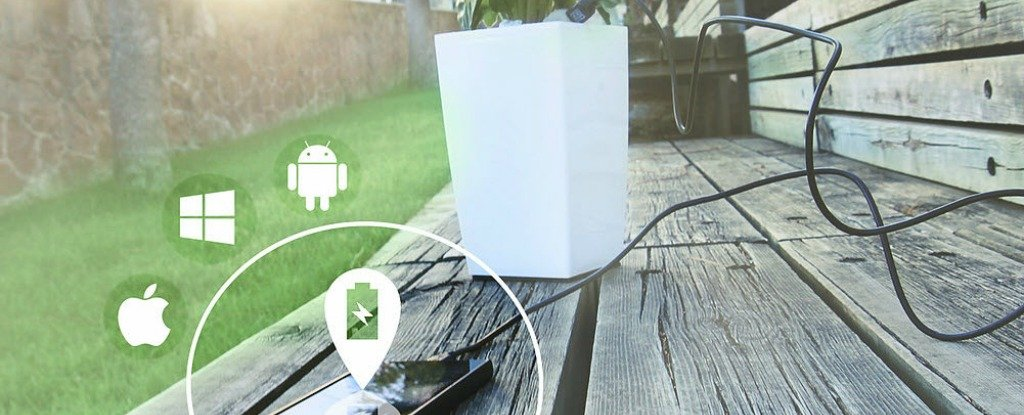 It Might Sound Unbelievable But This Pot Plant Can Actually Charge Your Phone!