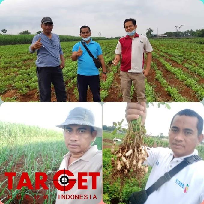 Pupuk Menghilang dan Mahal, Petani di Kabupaten Jepara Limbung Gundah dan Merana