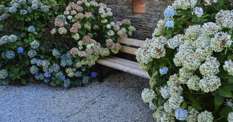 Les hortensias du haut bois - Variedades de hortensias ...