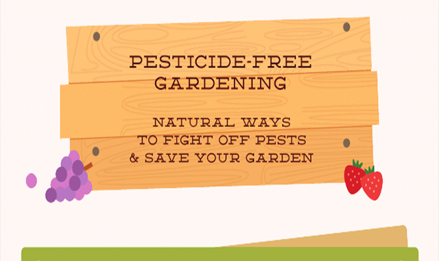 Natural Ways to Fight Off Pests and Save Your Garden #infographic