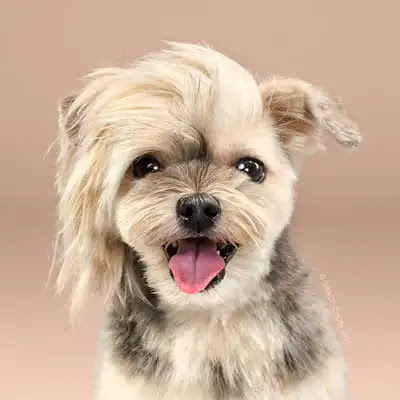 How to choose a suitable haircut for your dog