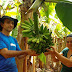 Frutas tropicais geram lucro em microclimas no Oeste Catarinense