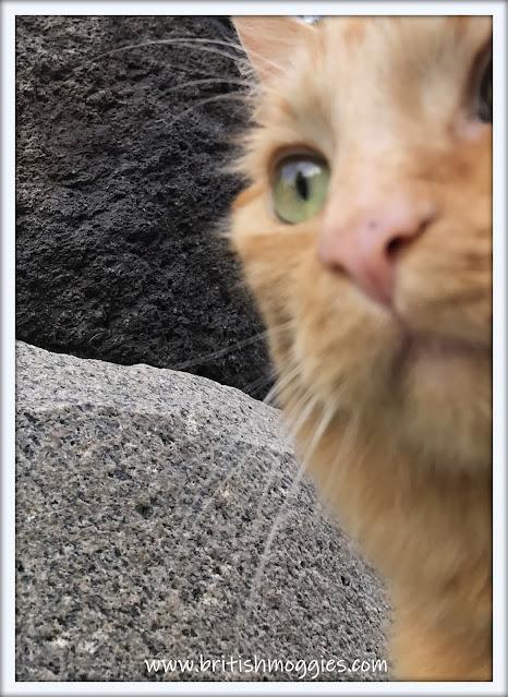 look up my nose, cat nose, ginger cat, cute cat