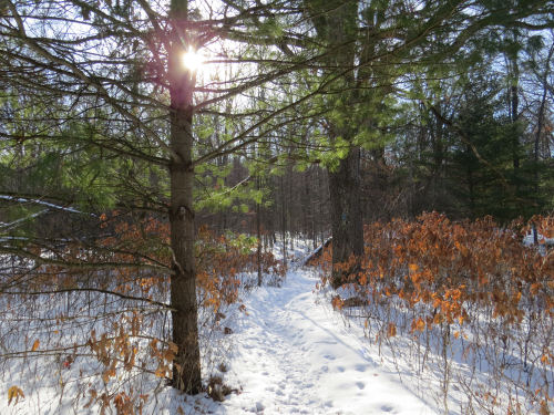 snowy trail in sunshine
