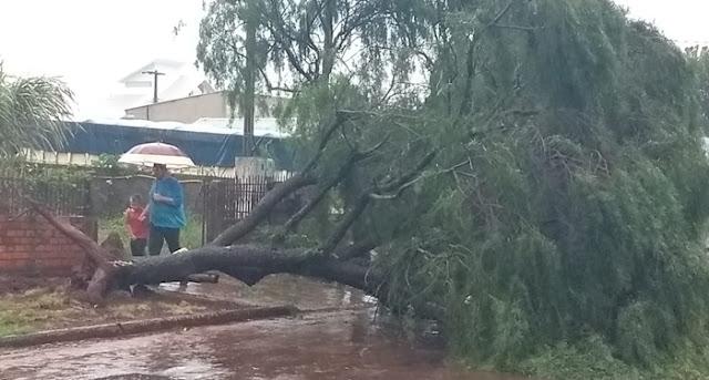 Roncador: Chuva com ventos fortes derruba árvores em Roncador