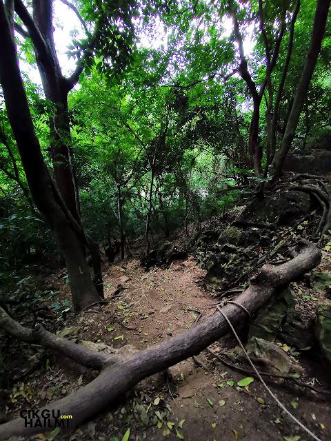 Best bau oksigen yang menebal kat dalam tempat hutan camnih